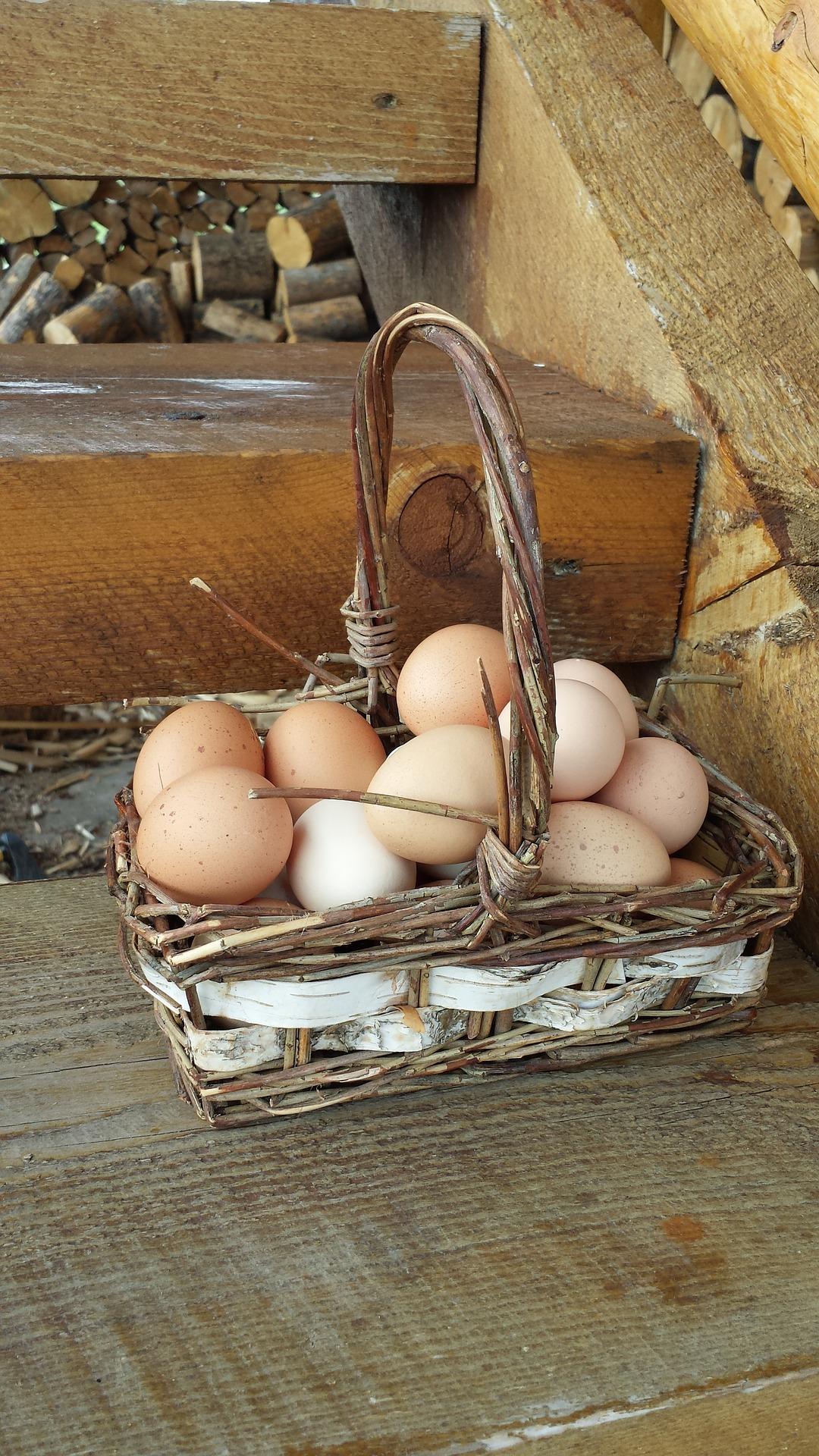 Разные корзины для одних и тех же яиц: где делать портфолио